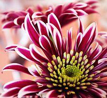 En pleine floraison by ChloeFaye