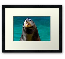 Silly Seal Framed Print