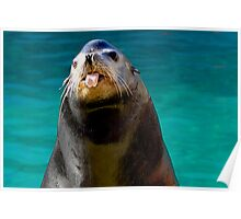 Silly Seal Poster