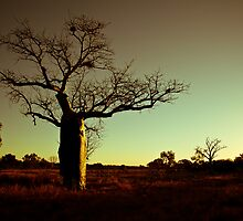 Australian Sunset with Boab Tree by aussie-photos