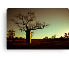 Australian Sunset with Boab Tree Canvas Print
