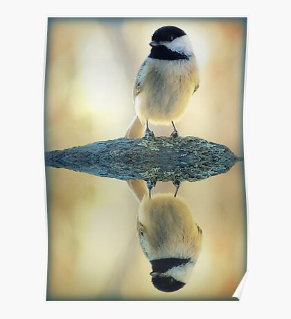 Reflecting Pool Chickadee Poster