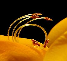RING OF LIFE by RoseMarie747