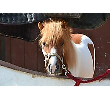 Peeking Pony Photographic Print