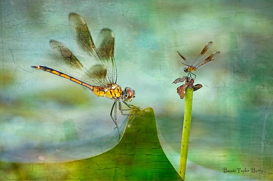 Dragonfly Fantasy by Bonnie T.  Barry
