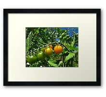 Nearly ripe Framed Print