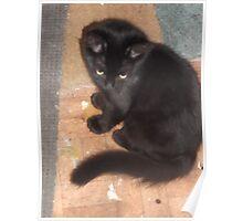 Kitten/looking really cute -(210812)- Digital photo Poster