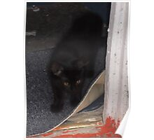 Kitten, about to explore garden -(210812)- Digital photo Poster