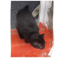 Kitten, about to explore garden/2 -(210812)- Digital photo Poster