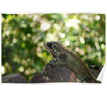 A Green Iguana Perching Poster
