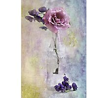 A Dusty Pink Rose Photographic Print