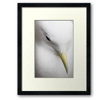 Kittiwake Portrait Framed Print