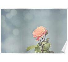 Bokeh Pink Rose Poster