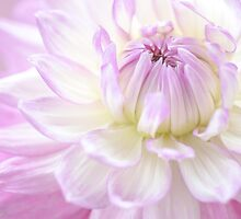 Lilac Dahlia by imagejournal