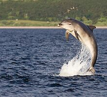 Moray Firth Dolphin by cjdolfin
