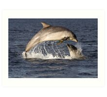 Moray Firth Dolphins Art Print