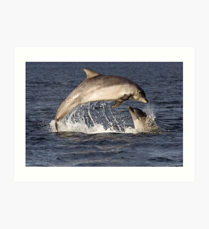 Moray Firth Dolphins Art Print
