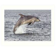Moray Firth Dolphin Art Print