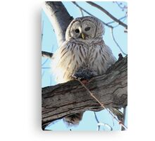 Adorable Barred Owl With Prey Metal Print