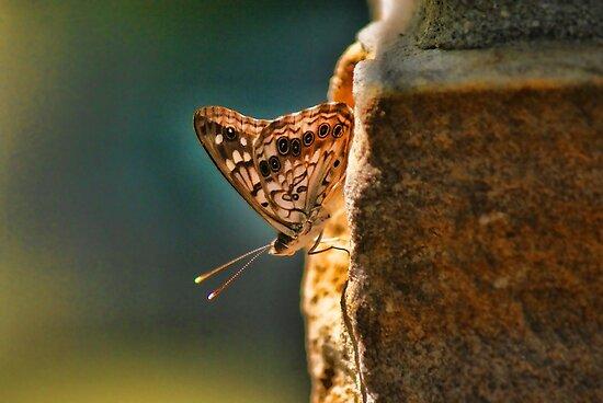Butterfly Sun Backlight by Rick  Friedle