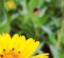 Daisy Garden Sticker