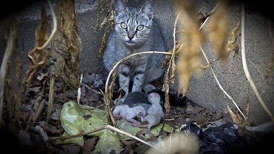 Kittens and Mom by Jessica Liatys