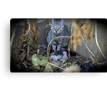 Kittens and Mom Canvas Print