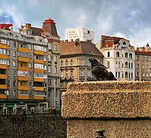 Pigeon by BMV1