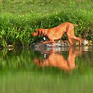 Hunting Hound by lorilee