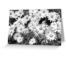 Monochrome Daisies Greeting Card