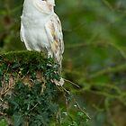 Purity ~ Barn Owl. (Tyto alba)  by Clare Scott