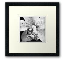 Saturday morning orchid Framed Print