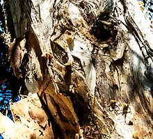 Old Man Paperbark Trunk Renewing. by ronsphotos