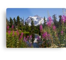 fireweed, picture lake, and mt shuksan, washington usa Metal Print