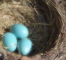 Robin's nest by Halobrianna
