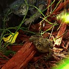 Animal In Hiding  by TKUsitalo