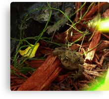 Animal In Hiding                       Pentax Digital Camera X-5 16 MP Canvas Print