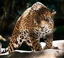 Panther by Chris SIMONNEAU