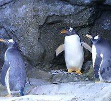 Penguins by Squeebo