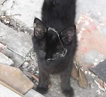 Kitten with cobweb all over it's face -(220812)- Digital photo by paulramnora