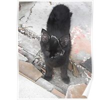 Kitten with cobweb all over it's face -(220812)- Digital photo Poster
