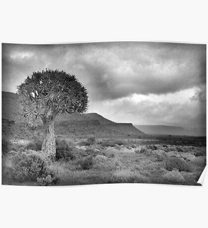 NAMAQUA, QUIVER TREE LANDSCAPE Poster