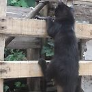 Kitten, climbing up fence -(220812)- Digital photo by paulramnora