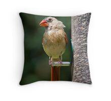 Female Cardinal on Sunflower Feeder Throw Pillow