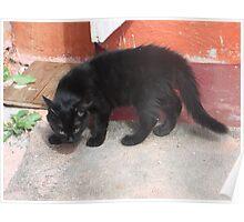 Kitten, striking a defensive pose -(220812)- Digital photo Poster