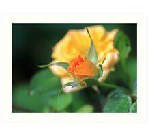 Peach Rose Art Print