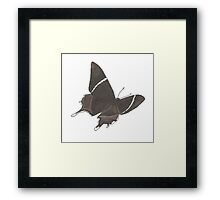 Spanish Swallowtail Framed Print