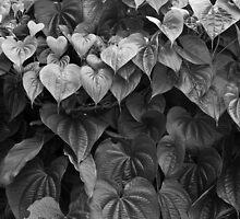 Monochrome Leafiness by photogenpix