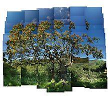 Rowan with Berries, Glen Stockdale Photographic Print