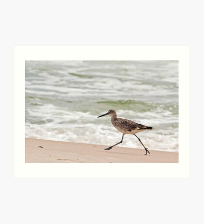 Willet (a type of sandpiper) Running Along the Beach Art Print